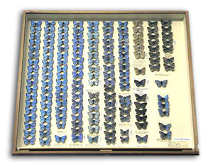 A drawer from the RCK collection.